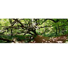 Scary Tree In Cornish Buebell Glade Photographic Print