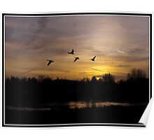 Canada Geese at sunset Poster