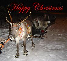 Christmas reindeer by woolleyfir