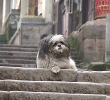 Shaggy Dog  on steps by davidleahy