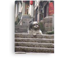 Shaggy Dog  on steps Canvas Print