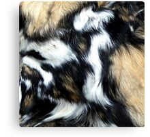 Fur Canvas Print