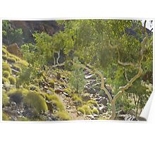 Ghost Gum at Ormiston Gorge Poster