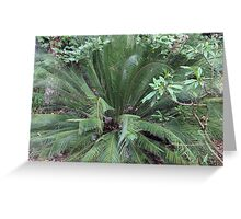 Macrozamia moorei Greeting Card