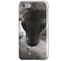 Sea Lion Pup iPhone Case/Skin
