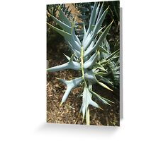 Encephalartos horridus Greeting Card