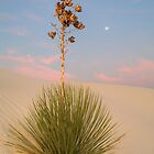 White Sands Yucca at Dawn by TheBlindHog