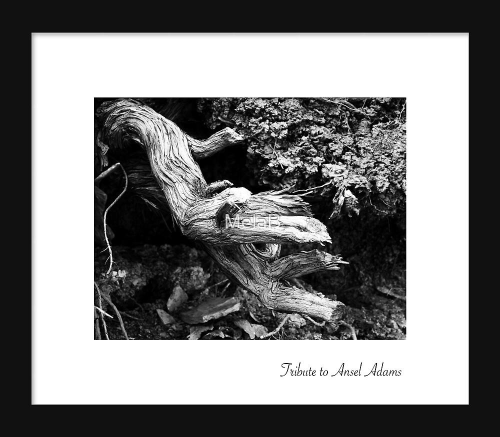 September - Ansel Adams by MelaB