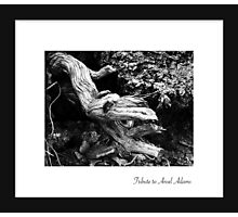 September - Ansel Adams Photographic Print