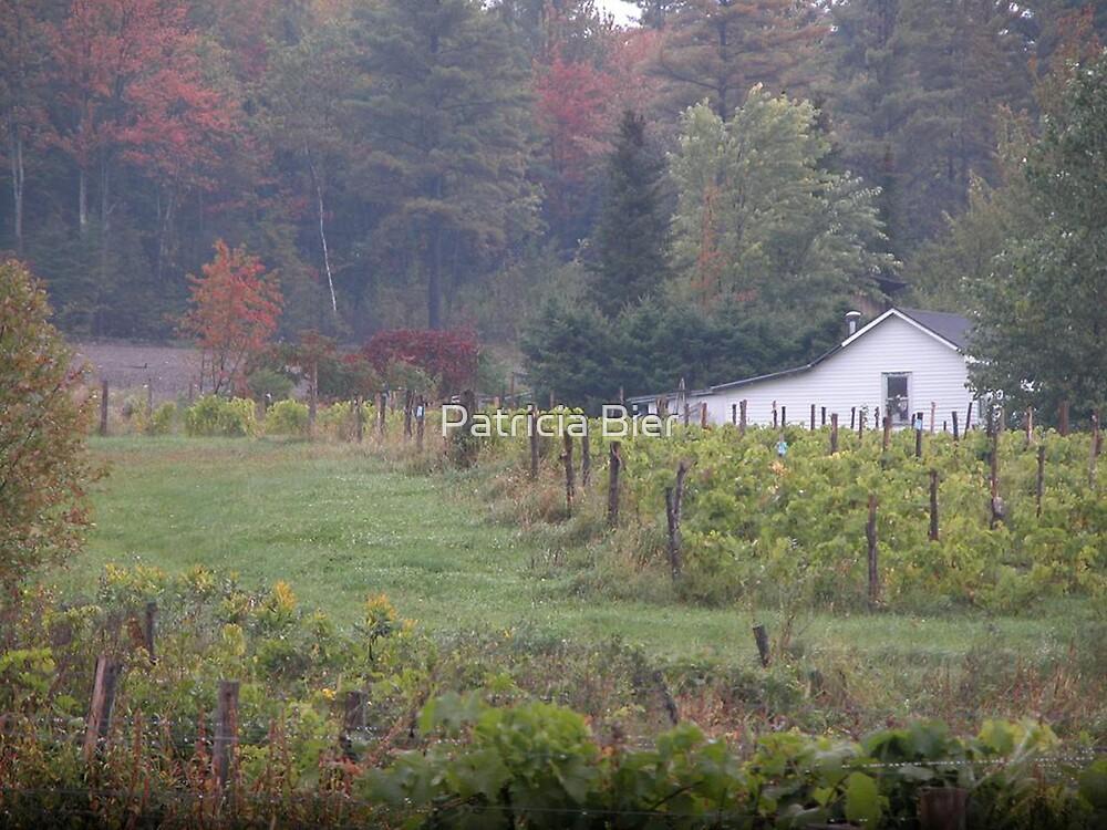 La petite maison dans le vignoble by Patricia Bier