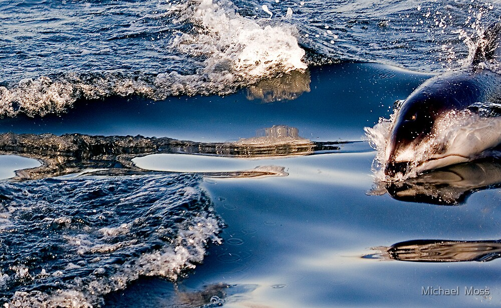 Gliding Through The Water by Michael  Moss