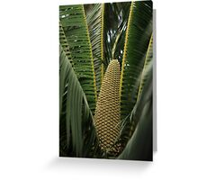 Microcycas calocoma Greeting Card