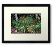 Ceratozamia kuesteriana Framed Print