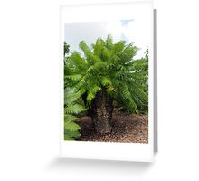 Cycas micronesica Greeting Card