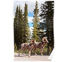 Bighorn brothers Poster