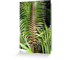 Ceratozamia mexicana Greeting Card