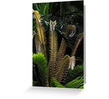 Encephalartos woodii Greeting Card