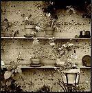Geraniums by Barbara Wyeth