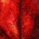 Veins of Red by stellaozza
