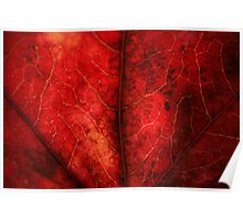 Veins of Red Poster