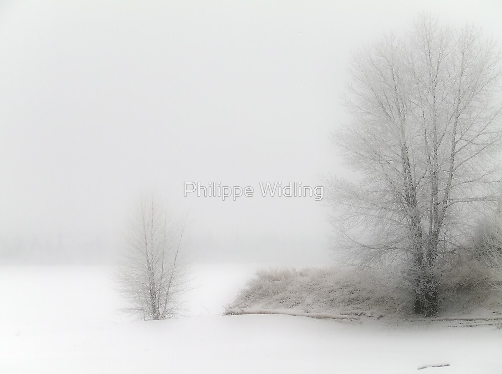 Winter lake shore & trees. by Philippe Widling