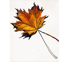 Fall Leaf (Yellow) Photographic Print