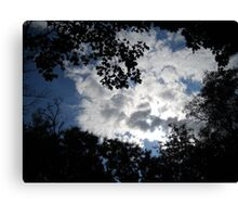 great sky  and wonderful trees Canvas Print