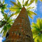 Cozy Palms by Anna  Ellis