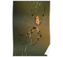 Orb-Weaver Spider Poster