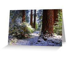Redwood Grove snow scene Greeting Card