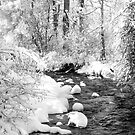 Gallatin Valley Creek by kayzsqrlz