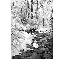 Gallatin Valley Creek Photographic Print