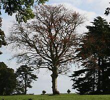 Trees at Powderham by Michelle Lovegrove
