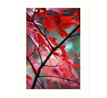 Fall Focal Point - Red Art Print