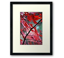 Fall Focal Point - Red Framed Print