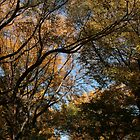 Central Park Fall 04 by chianing