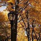 Central Park Fall 05 by chianing