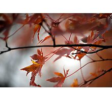 Fall Focal Point - Bronze Photographic Print