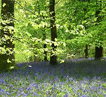 Bluebell Wood by Sally-Anna
