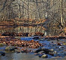 Late Autumn by cherylc1