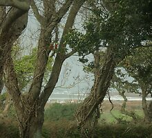 A sea view through the trees by Profo Folia