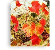 Last of the Summer Vine Canvas Print