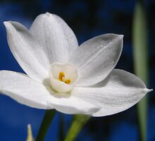 Narcissus by jsmusic
