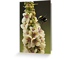 Bee and Verbascum Greeting Card