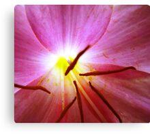 Violet Flower Glow-(Floral Macro) Canvas Print