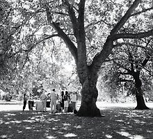 Plane Tree, Greenwich Park 2005 by Michael Sissons