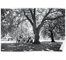 Plane Tree, Greenwich Park 2005 Poster