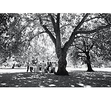 Plane Tree, Greenwich Park 2005 Photographic Print