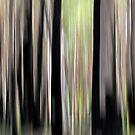 Spring Forest by Kitsmumma