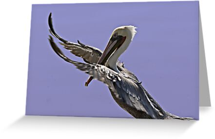 Pelican Tai Chi by Michael  Moss